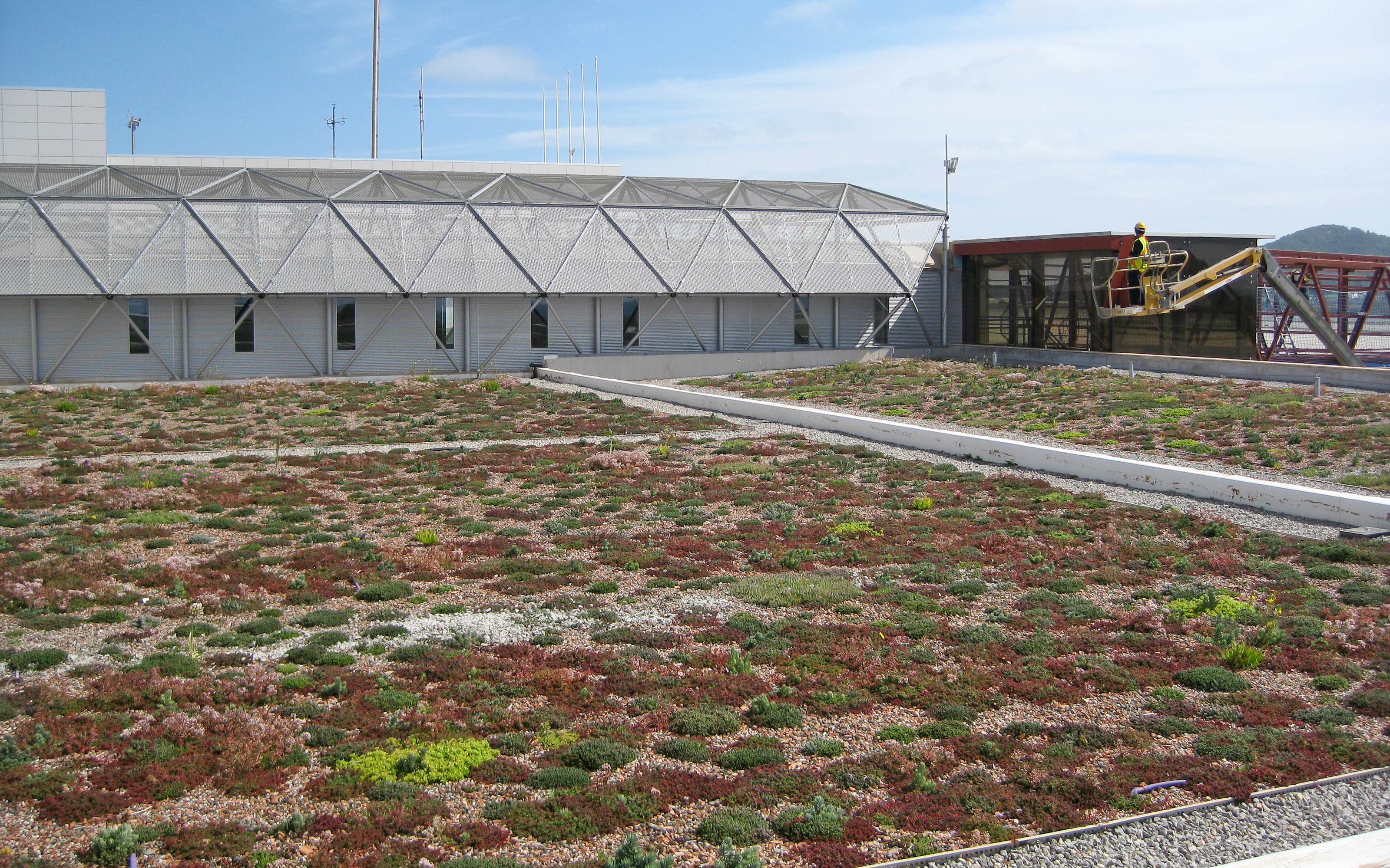 Newly planted green roof