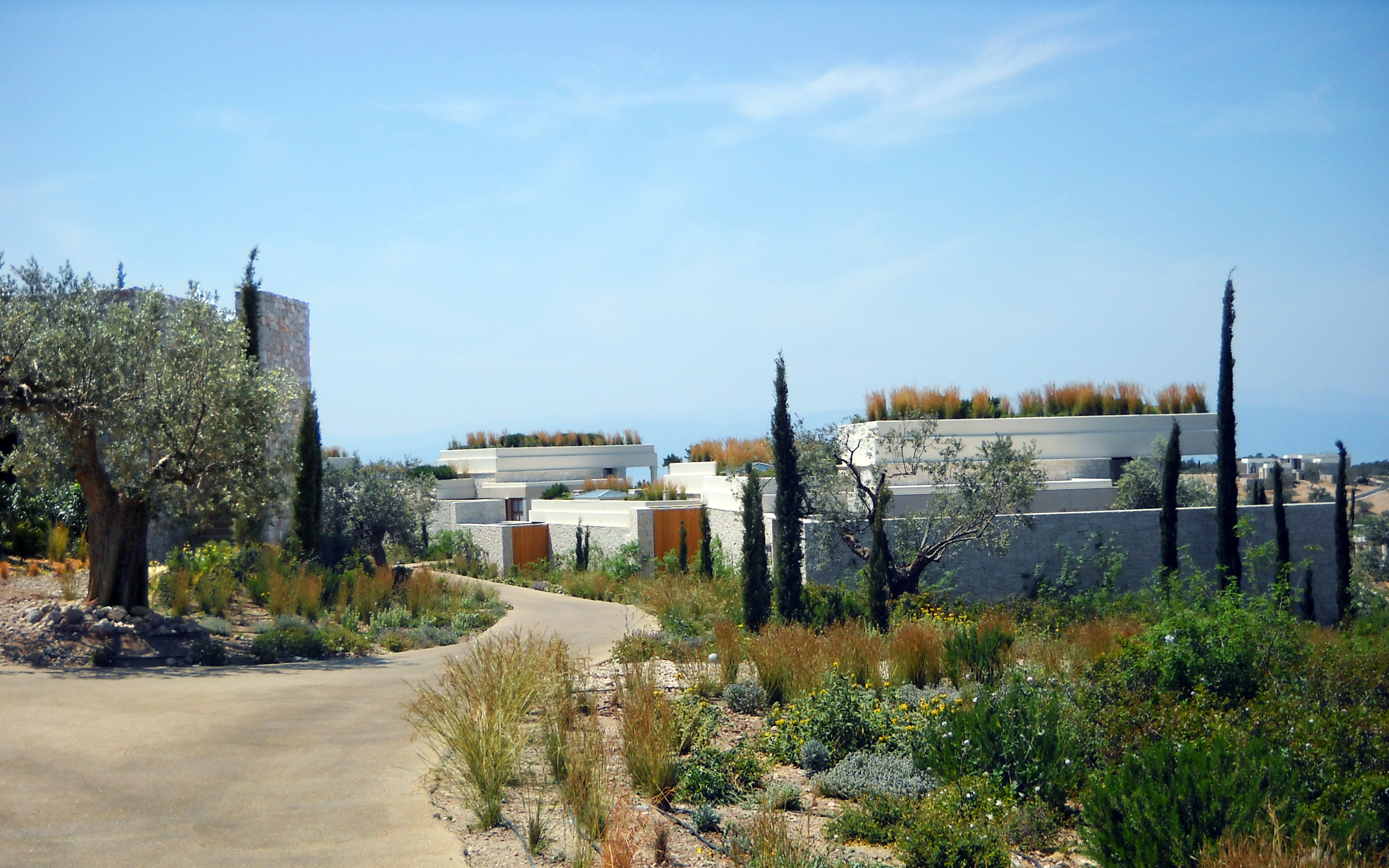Green roofs with grasses in mediterranean landscape