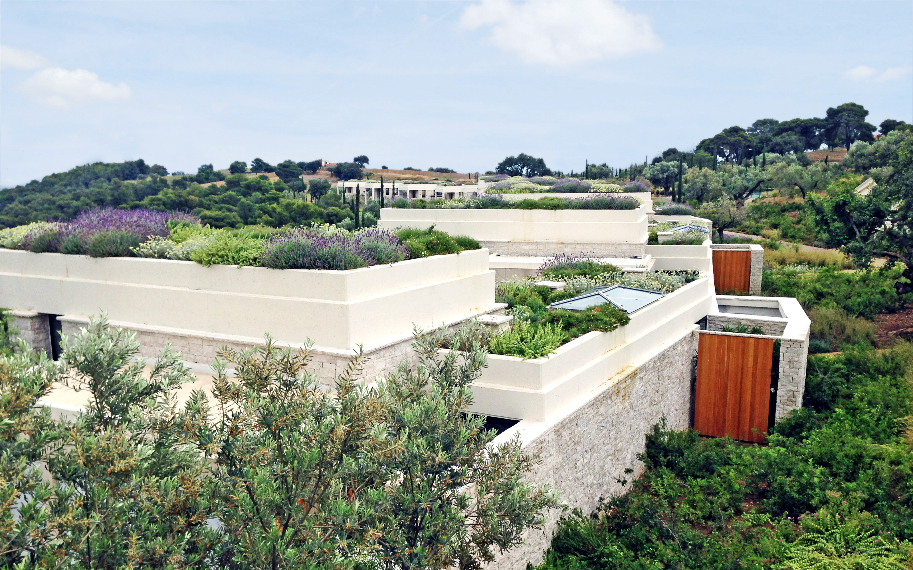 Green roofs with herbs on stone houses