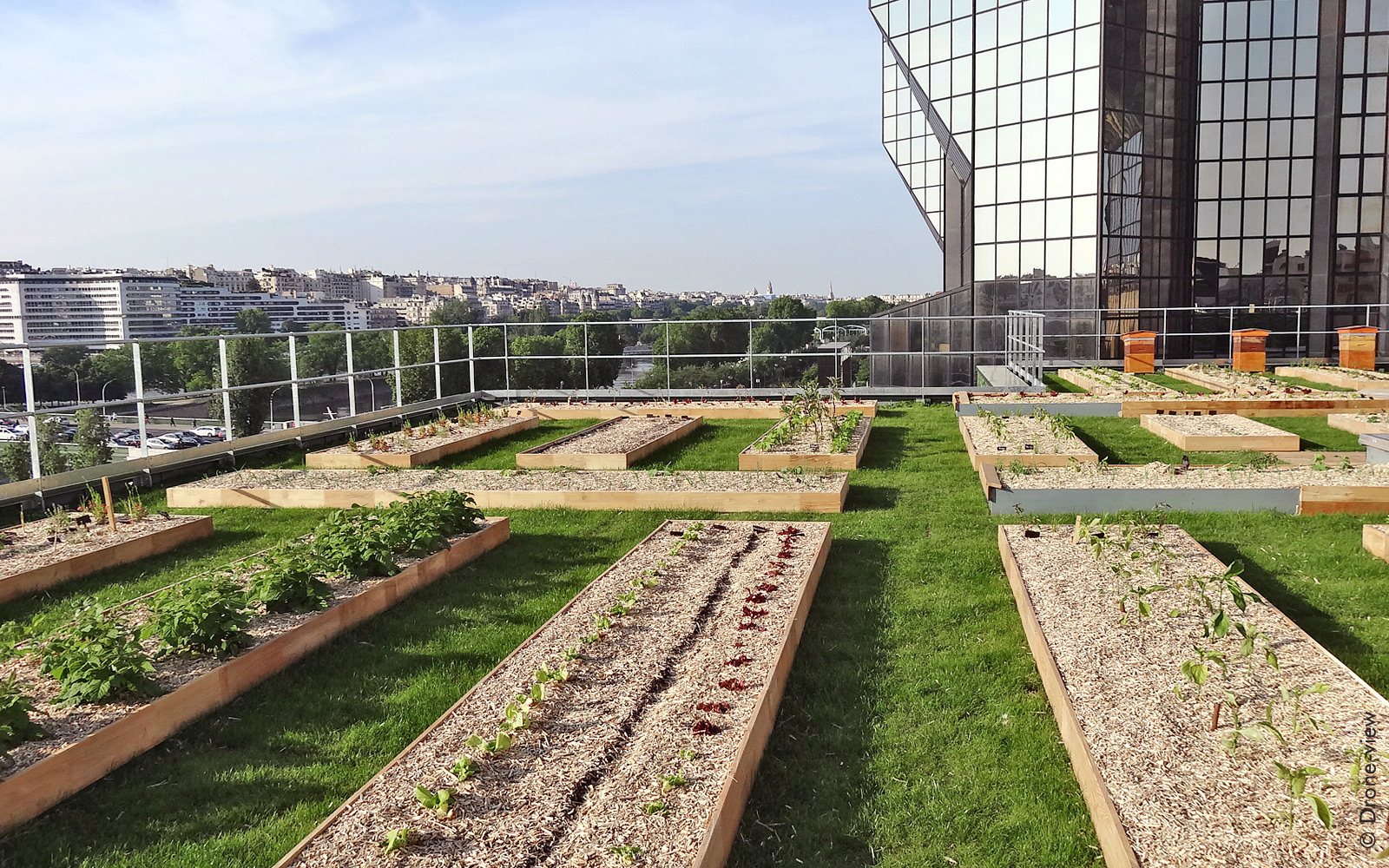 Vegetable planting beds and beehives on a roof in the city