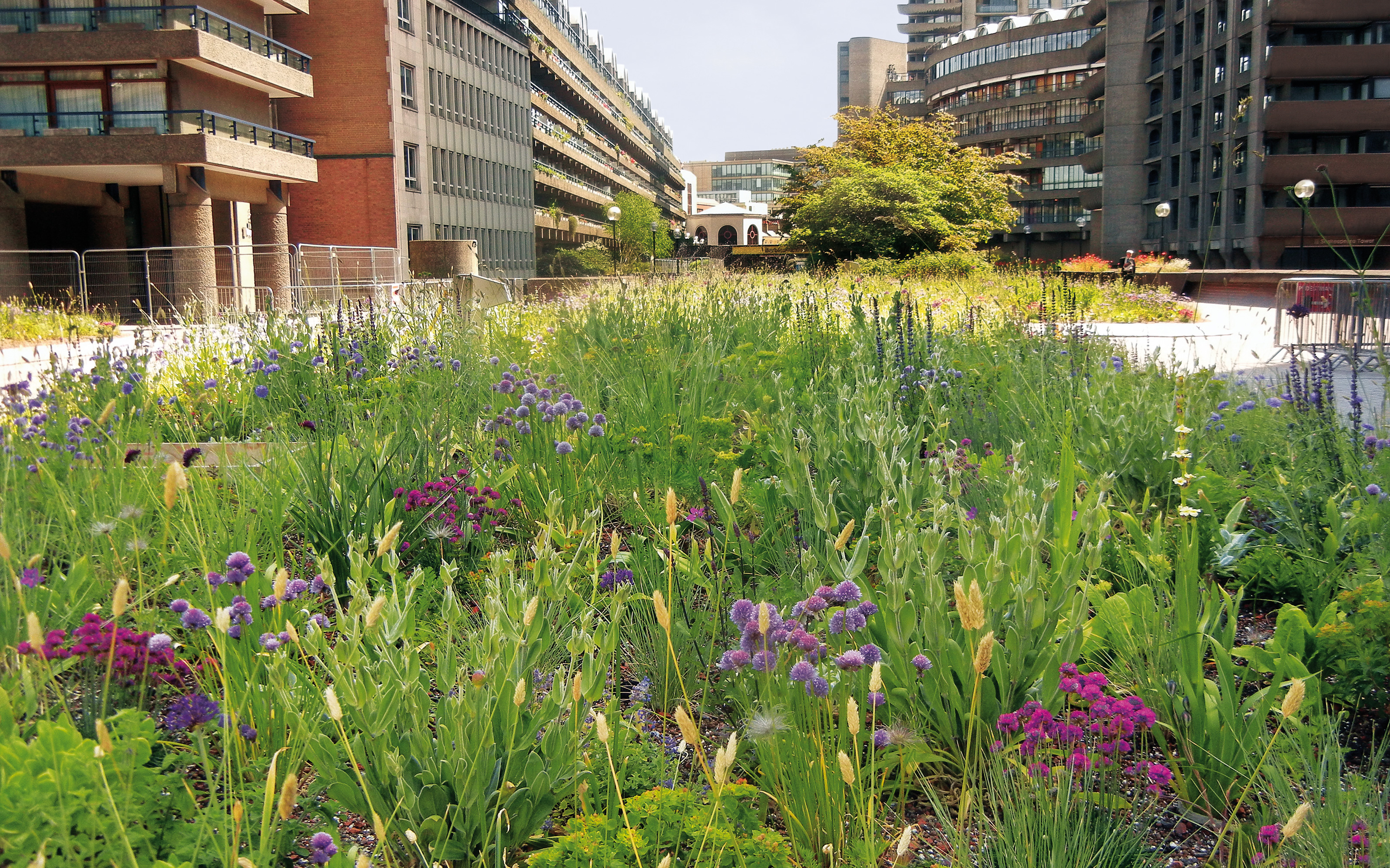 Flowering meadow surrounded by buildings