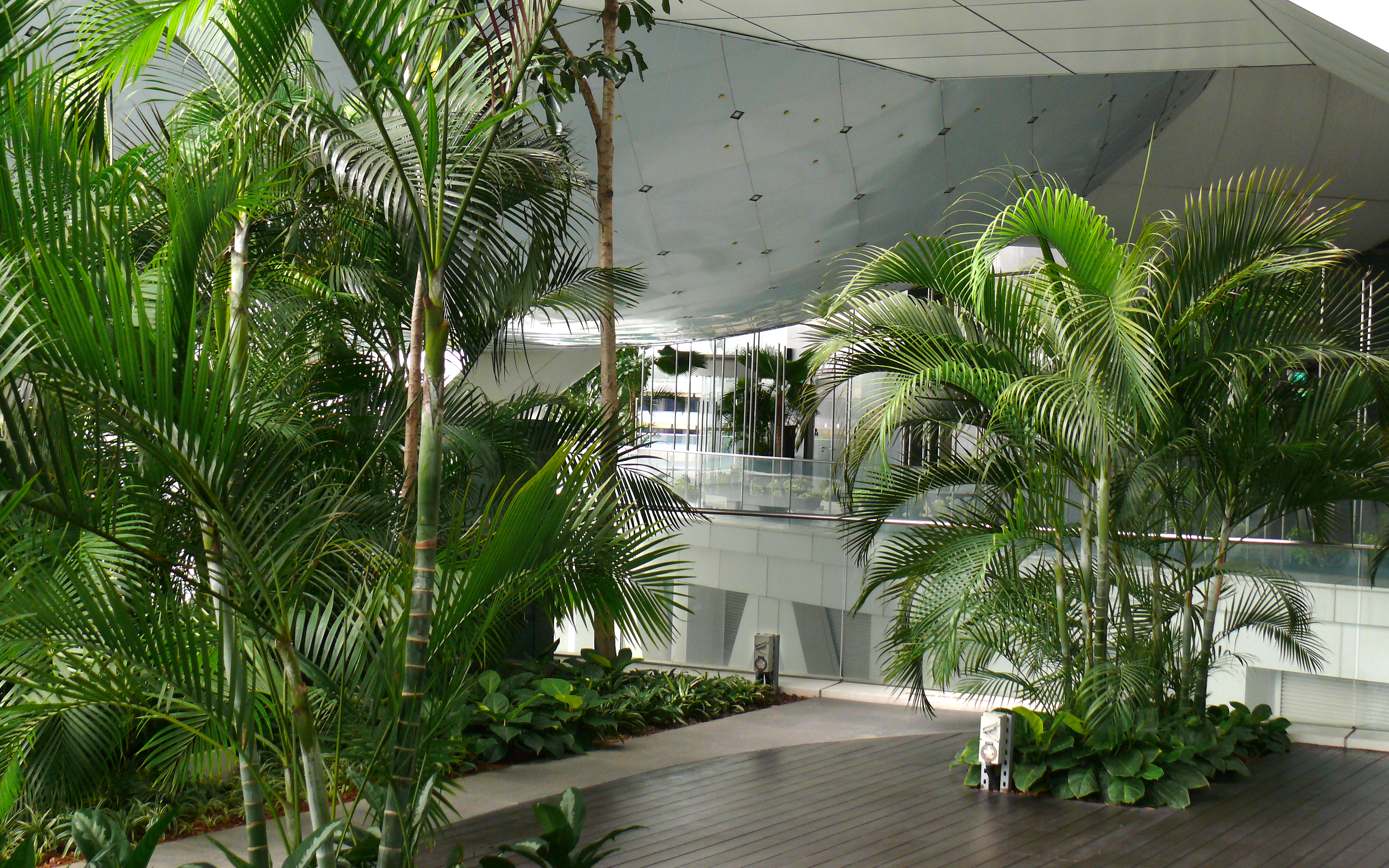 Large palm trees inside a building