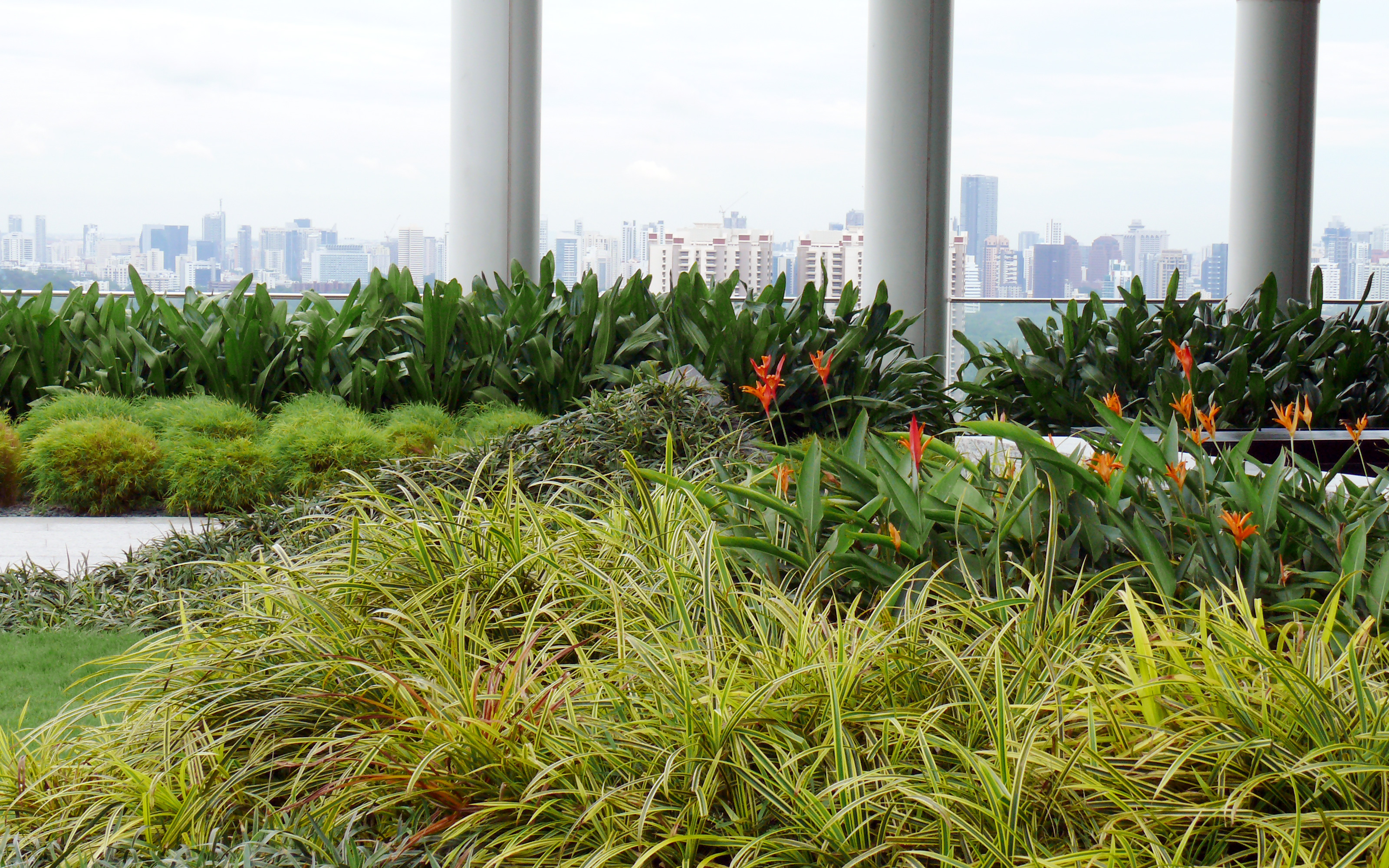Roof garden with shrubs and small bushes