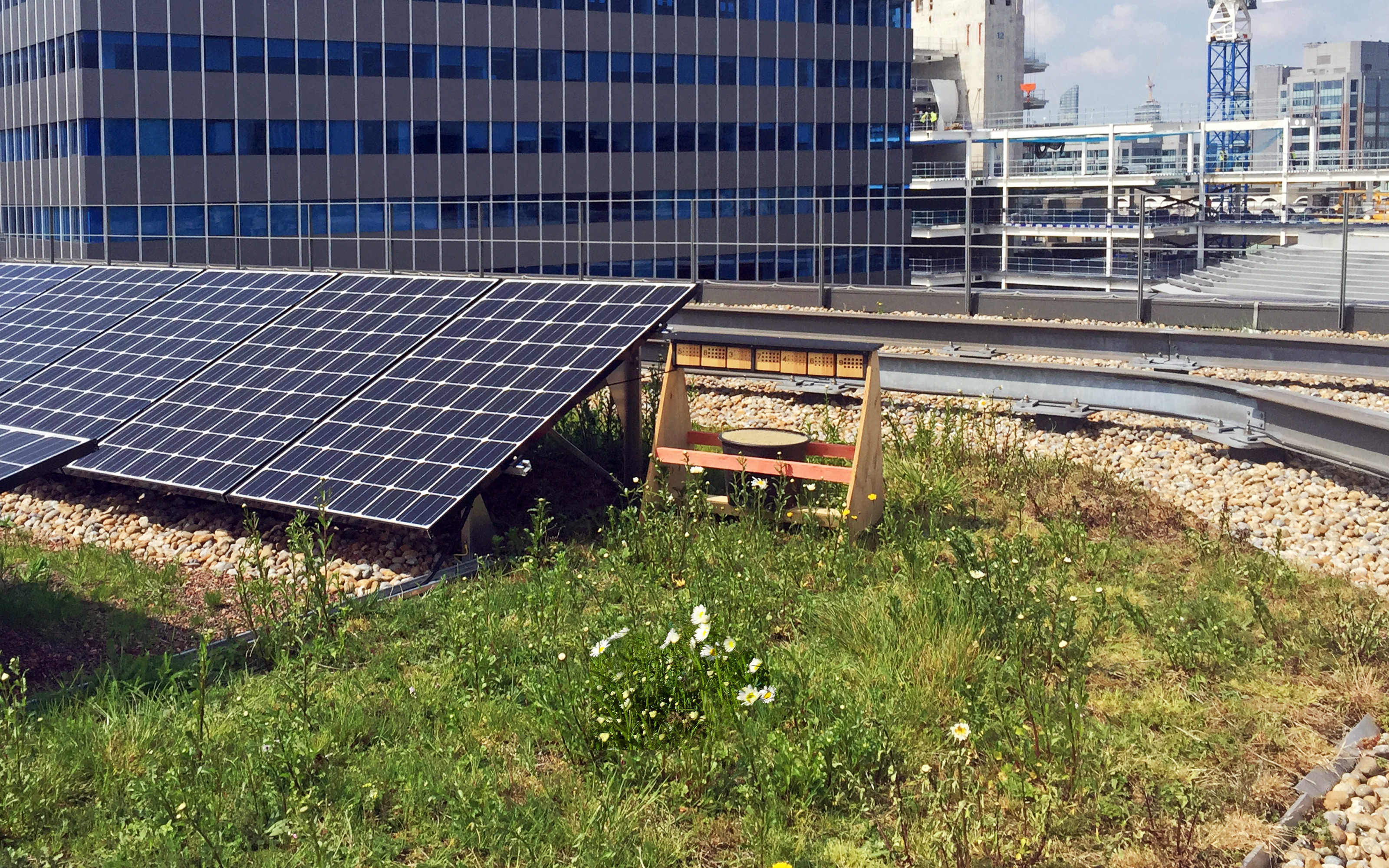 Solar panels and nesting aid for insects on a green roof