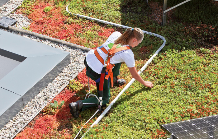 Roof gardener with fall protection