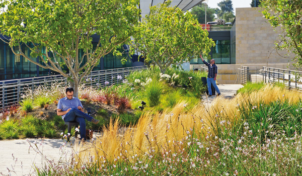 Two men on a green roof with shrubs, ornamental grasses and small trees