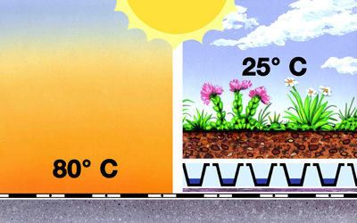 Temperature on a green roof compared to a bitumen roof