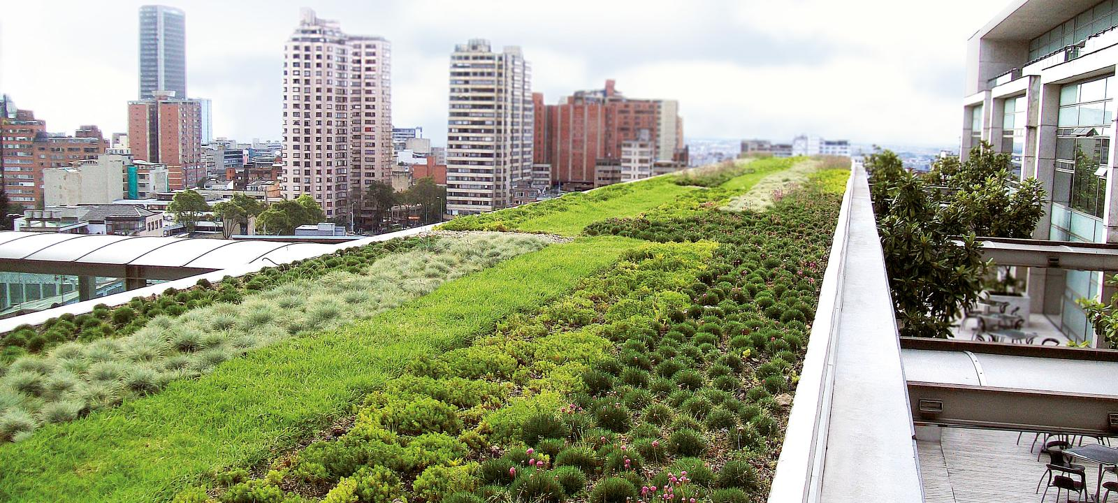 Extensive green roof in a big city