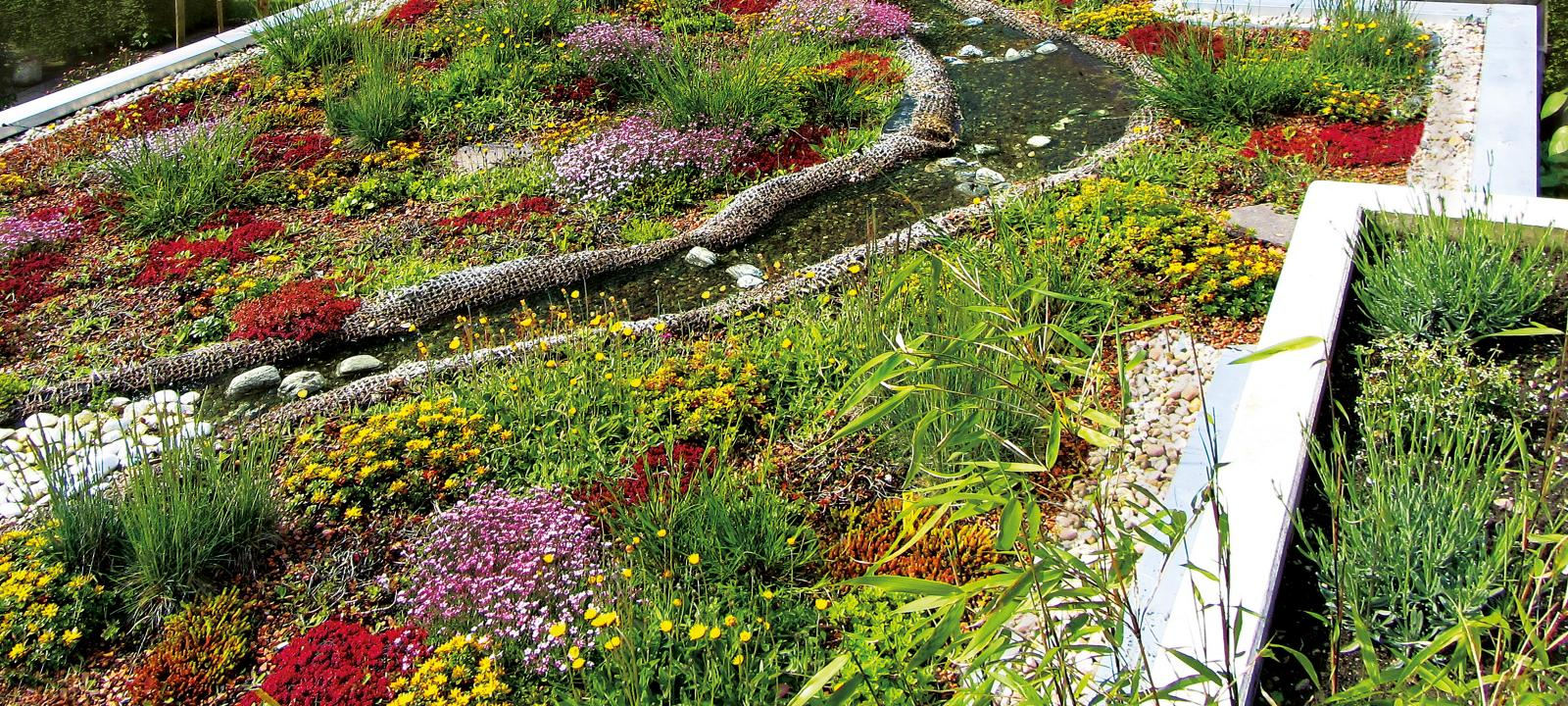 Biodiverse Green Roofs Zinco Green Roof Systems Uk