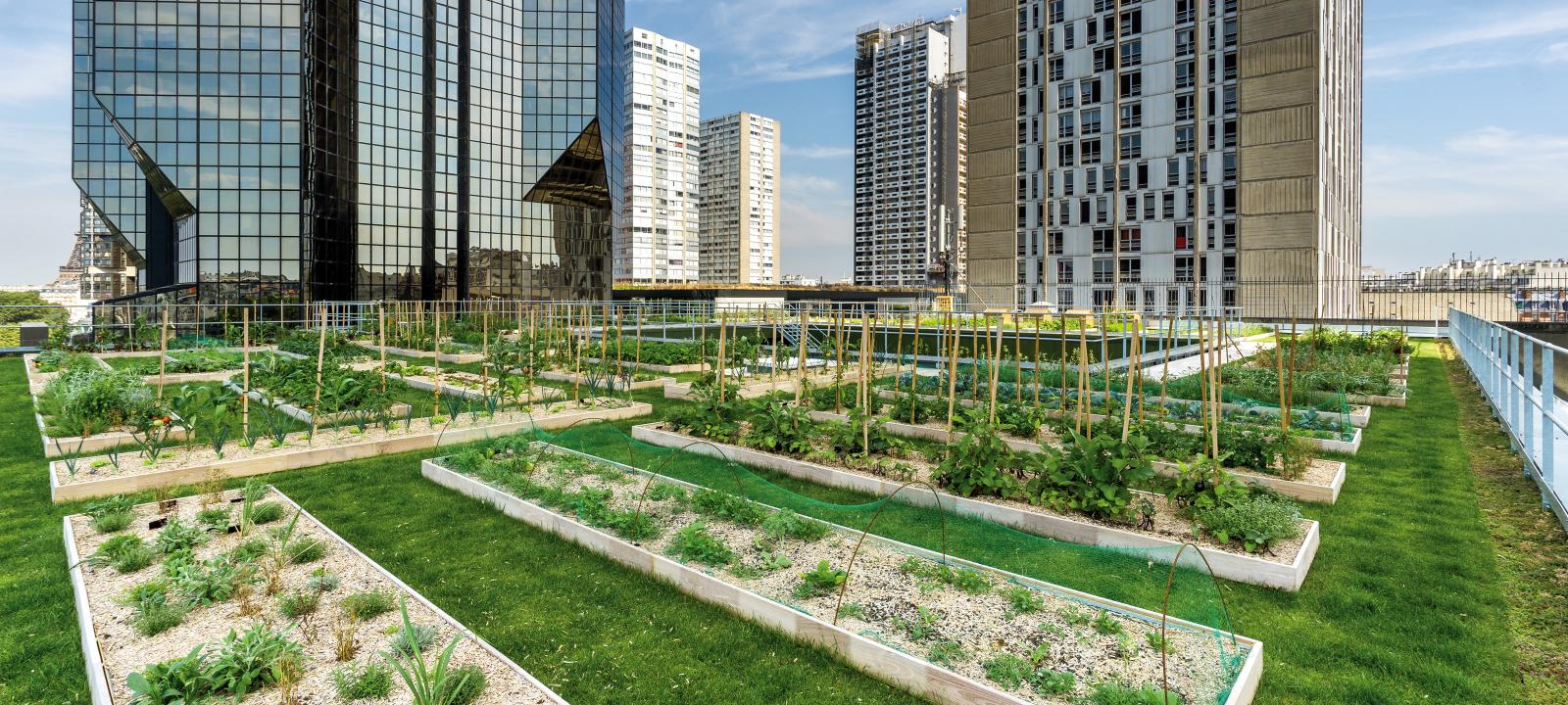 Urban Rooftop Farming Zinco Green Roof Systems Uk