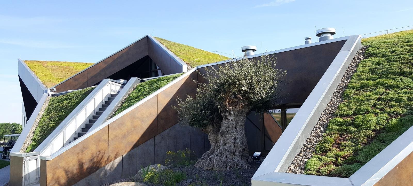 Olive tree in front of a building with a pitched green roof