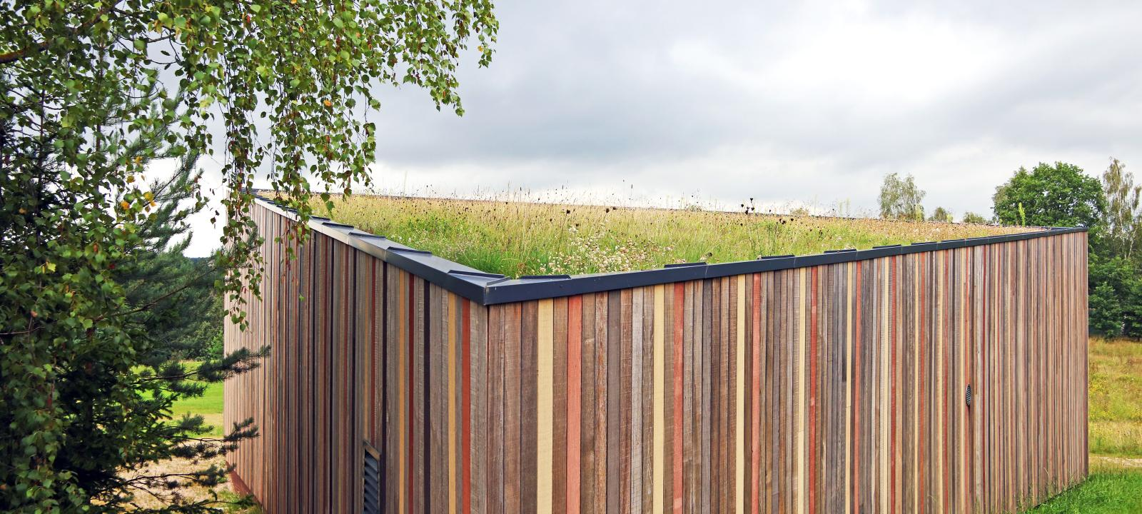 Birch tree infront of a wooden shed with an extensive green roof