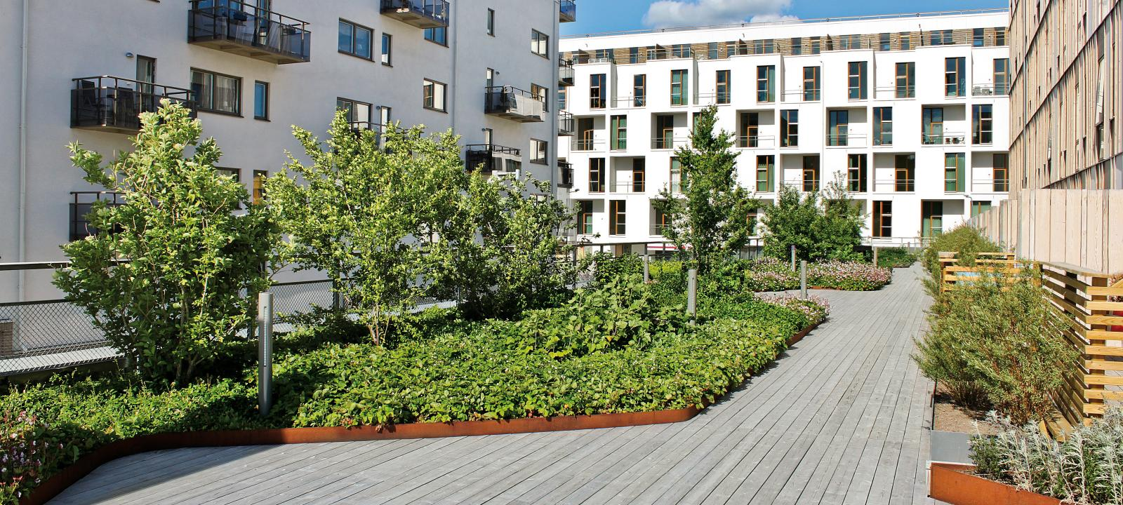 Roof garden with plant beds and timber decking