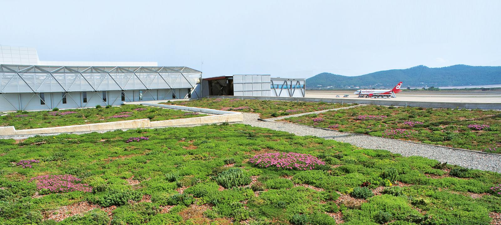 Flowering extensive green roof at the airport