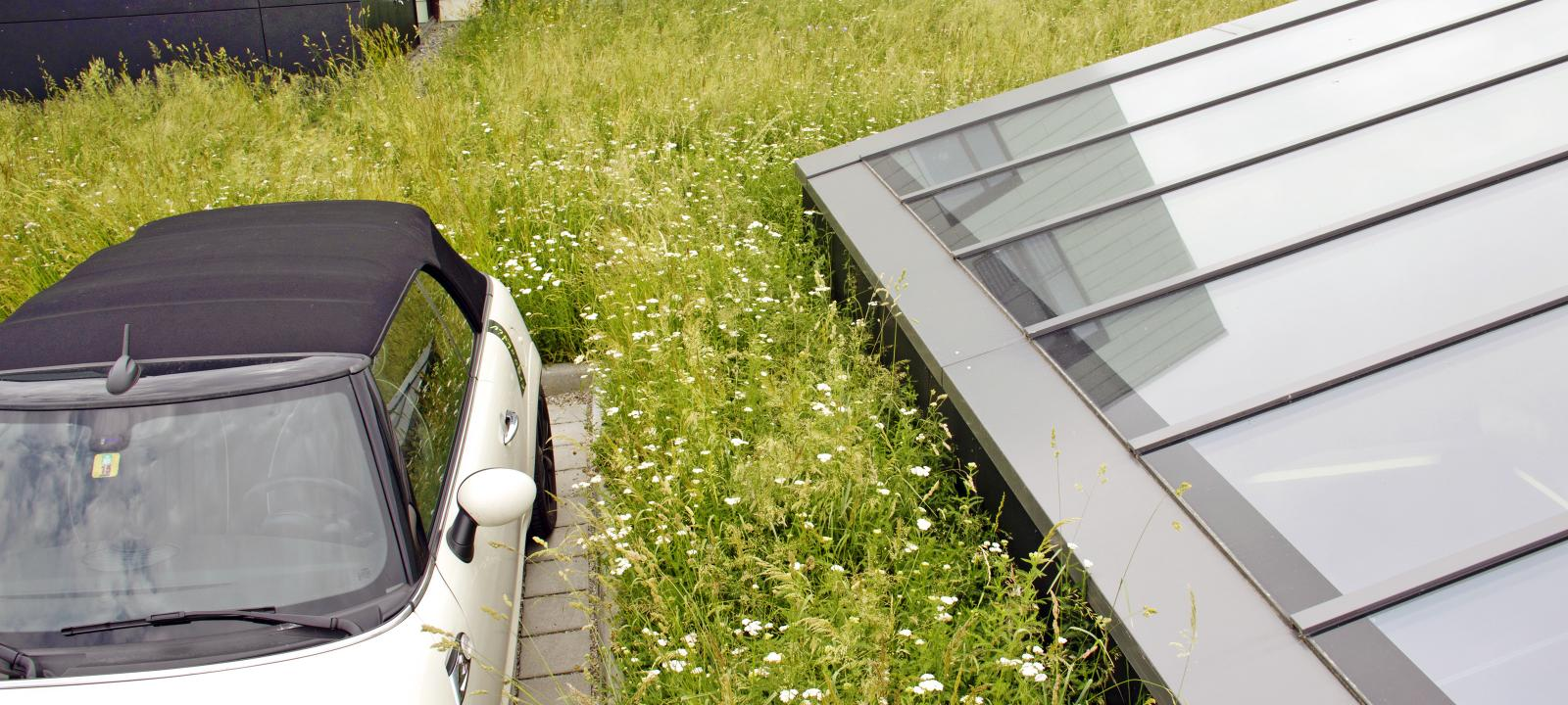 Car on a green roof surrounded by a meadow