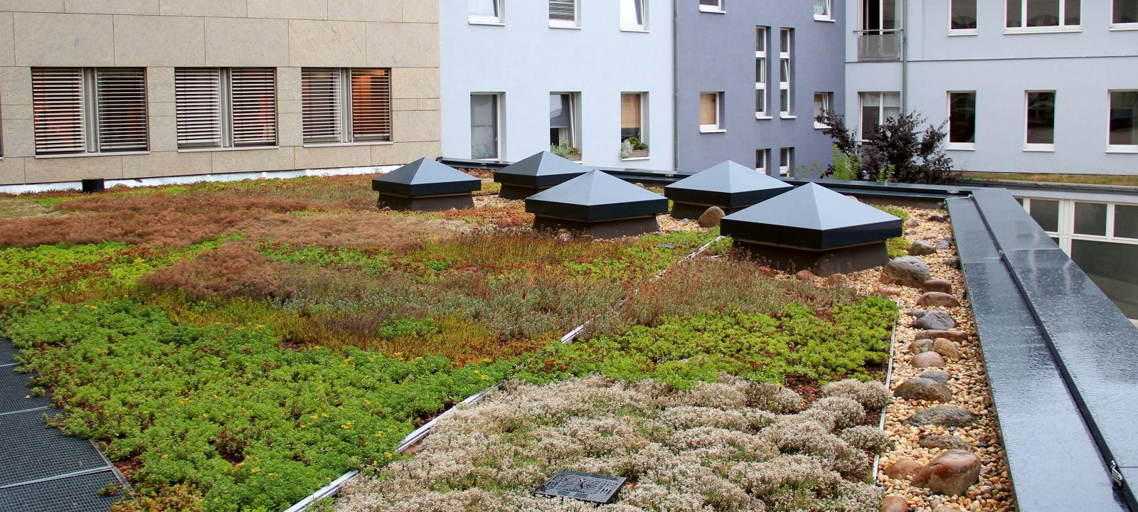 Extensive green roof during rainfall