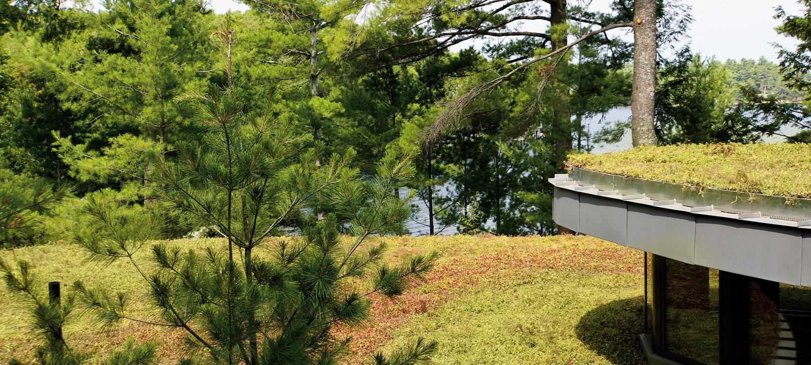 Extensive green roofs in front of pine trees