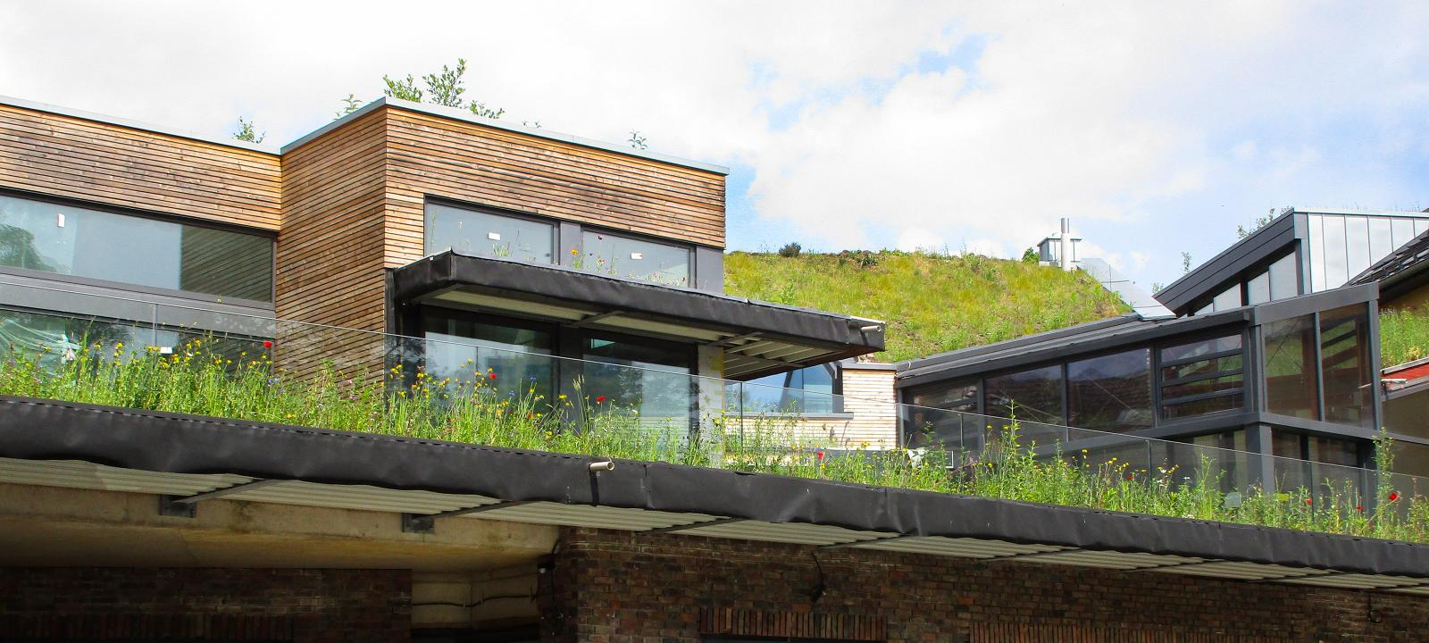 Pitched green roof and a meadow on a flat roof