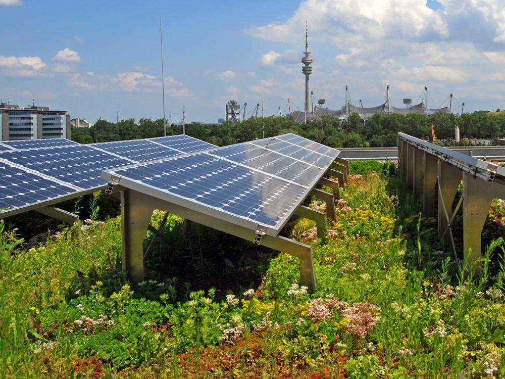 Green roof with photovoltaics