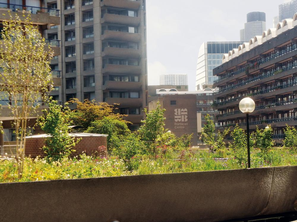 Roof garden surrounded by residential blocks
