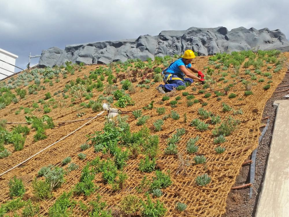 Roof gardener on a pitched green roof