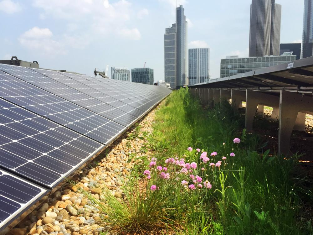 Green roof in combination with solar energy