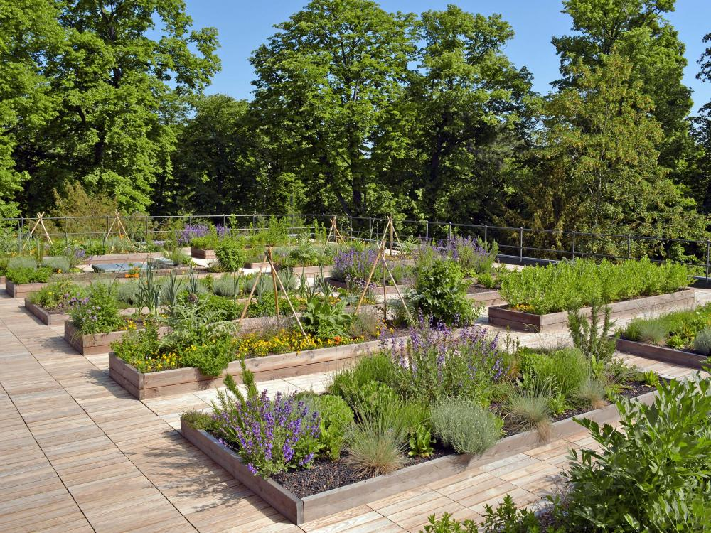 Roof garden with herb and vegetable plots