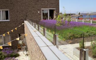 Apartment building and green roof vegetated with lavender