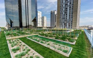 Roof garden with lawn and plant beds in the city