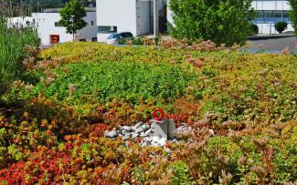 Sedum roof with Fallnet® SR