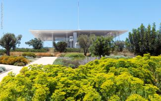 Green roof with olive trees and flowering shrubs and herbs