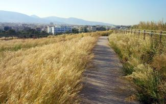 Pathway through ornamental grasses on a green roof
