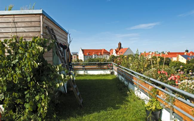 Roof garden with lawn and vines
